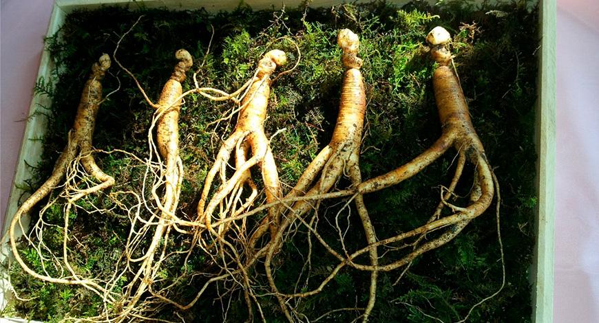 Экстракт корня женьшеня (панаксозиды)