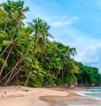 Экстракт пальмы сереноя, сабаль